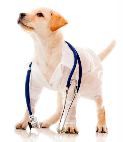 clínica veterinária cachorro