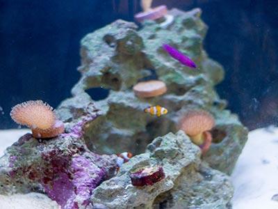 Enfeite de aquário