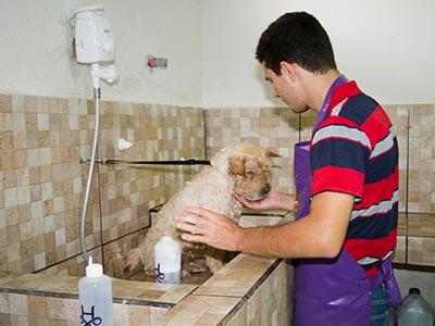 Banho em cães