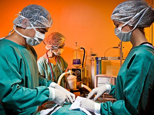 Cirurgias em cães e gatos