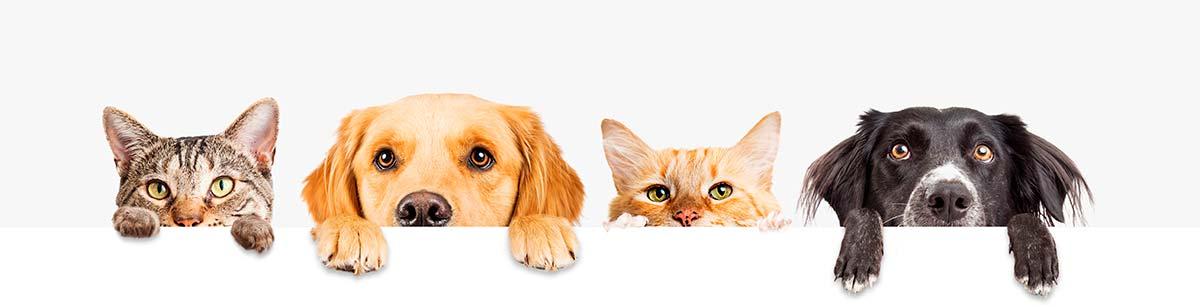 Cuidados para cães e gatos