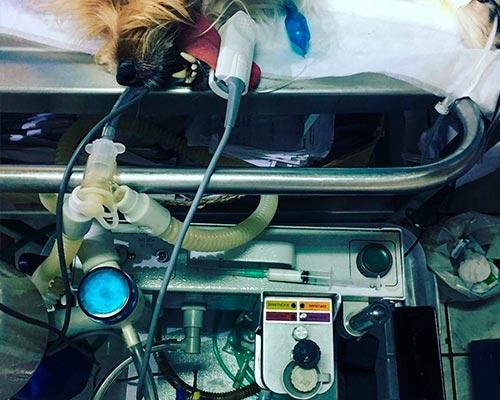 cirurgia-veterinária