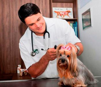 médico-veterinárioo