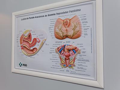 saúde sexual e reprodutiva da mulher